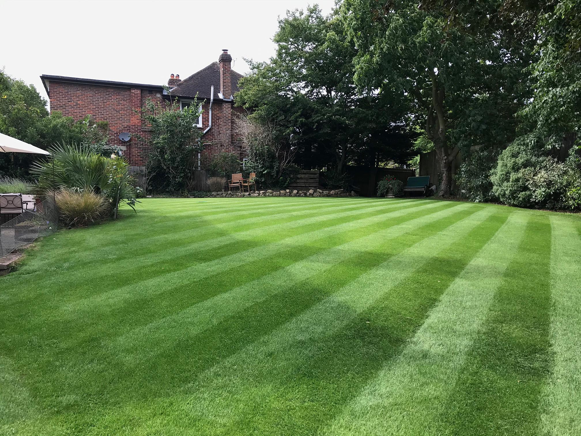 estate grass